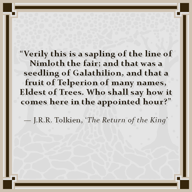 """""""Verily this is a sapling of the line of Nimloth the fair; and that was a seedling of Galathilion, and that a fruit of Telperion of many names, Eldest of Trees. Who shall say how it comes here in the appointed hour?"""" — J.R.R. Tolkien, 'The Return of the King'"""